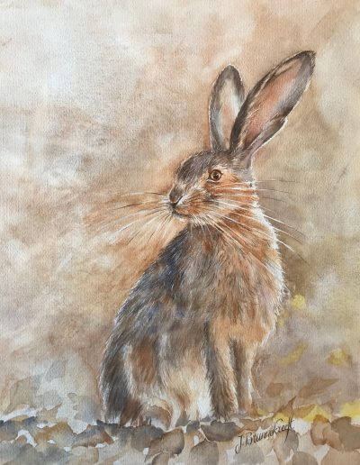 Hare | Size 40 x 50 cm